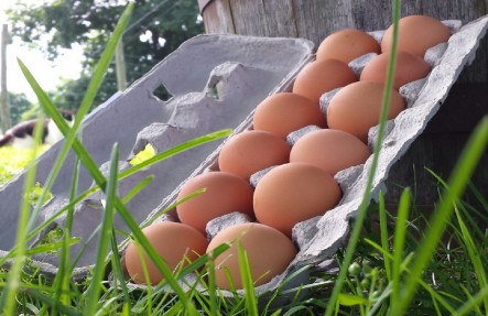 Certified Organic Eggs Doz