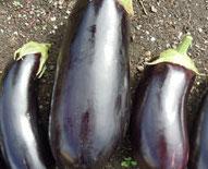 Organic Italian Eggplant 4lb