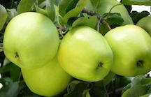 Organic Granny Smith Apples 3lb Bag