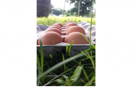 Feather Ridge Large Farm Fresh Eggs