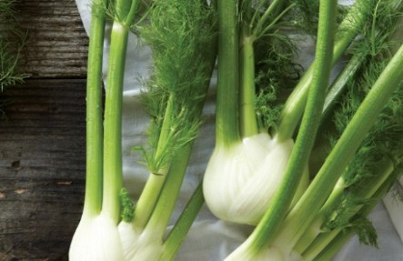 Fennel Bulb & Frond 3 Pack