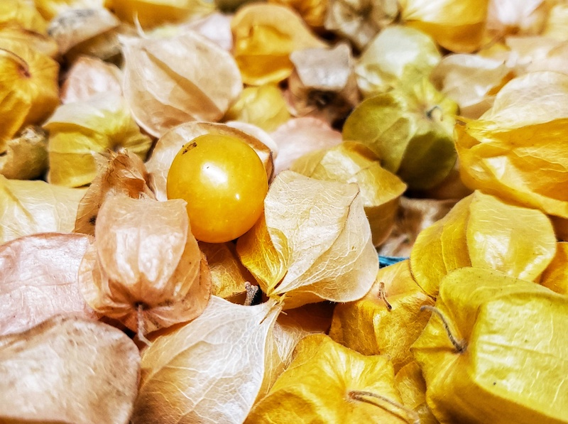 Ground Cherries Pint $5