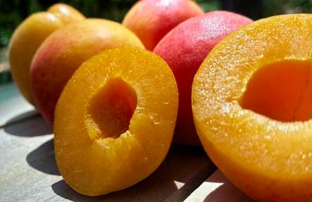 Organic Apricots 2lb bag