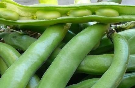 Organic Fava beans 2lb Bag
