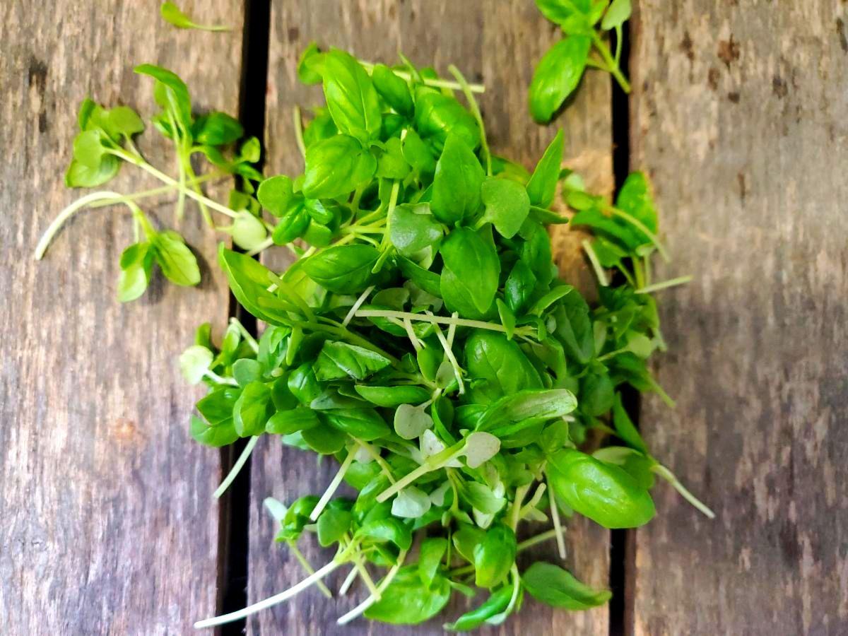 Organic Basil MicroGreens 20z