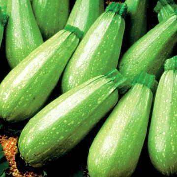 Organic Zucchini 3lb Bag